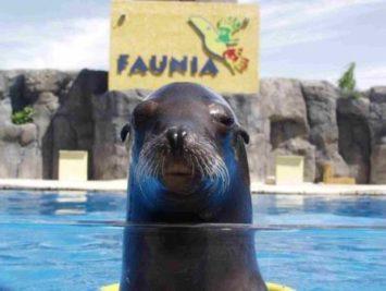 89 1 355x267 - Faunia