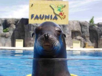 89 1 355x267 - Oferta Faunia más hotel