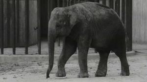 90 5 - Zoo